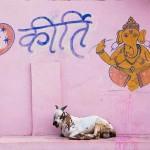 Orchaa, Madhya Pradesh. Thomas Cole, 'Don't Miss India!'