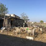 reWoven weaver Terlan Mamedova's family small holding, Karachopt village